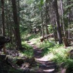 Trail near Flathead Lake